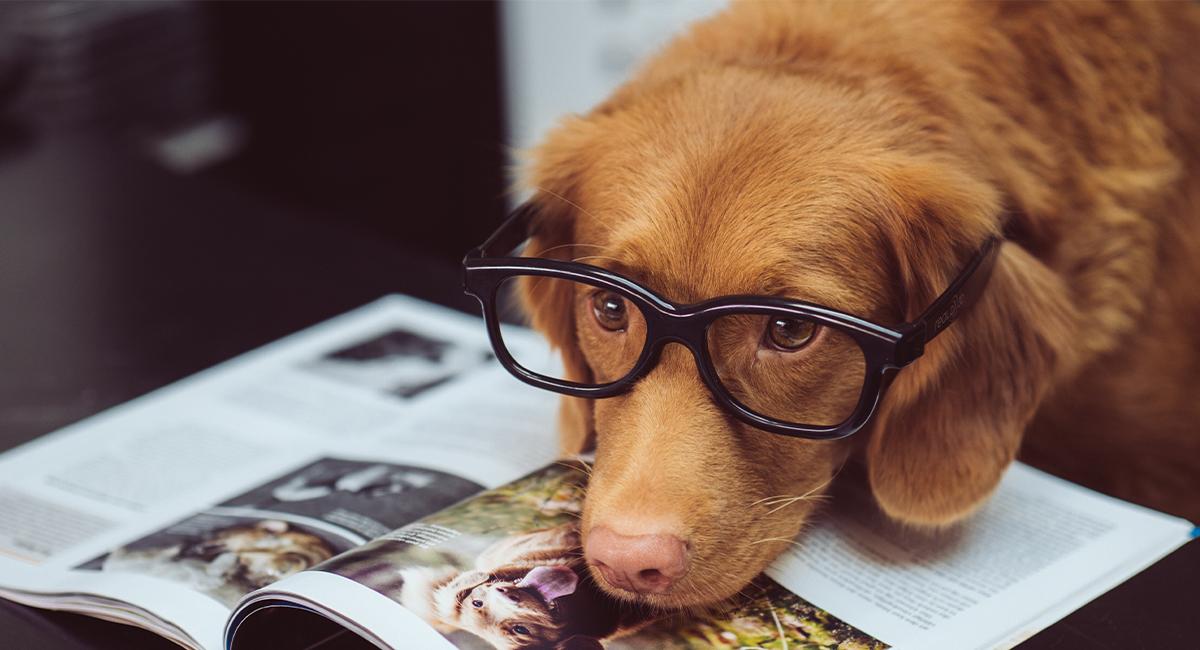 Jobba med hundar