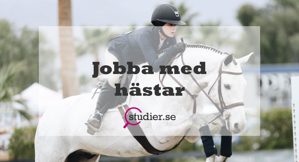 Jobba med hästar_